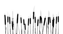 Cattails Silhouettes