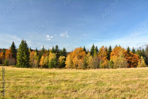 Plakat Jesień las w górach