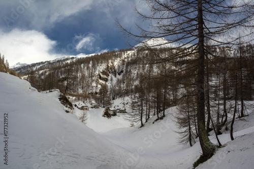 Staande foto Grijze traf. landscape