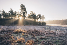 Sunrise And Mist On A Frost Co...