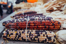 Batches Of Indian Corn On A Farm Stand