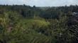 green rice terrace in bali indonesia
