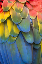 Brightly Colored Macaw Parrot Feathers