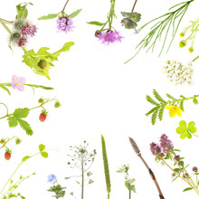 Botanical Background Of Field Flowers And Plants