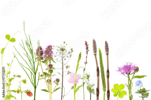 botanical background of field flowers and plants Canvas-taulu