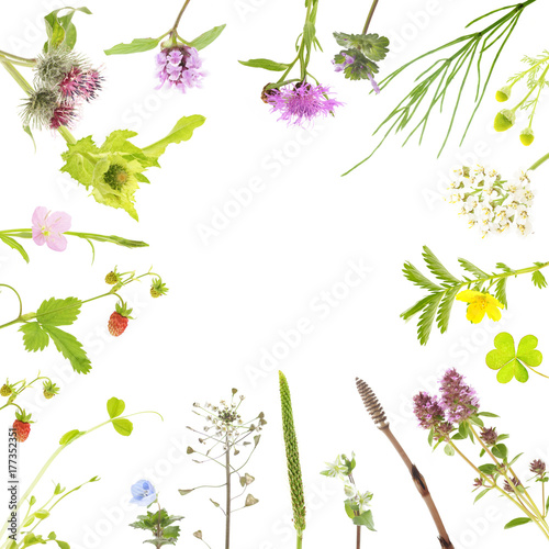 Fotografia, Obraz  botanical background of field flowers and plants