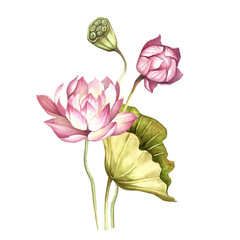Plakat Composition with lotus. Hand draw watercolor illustration