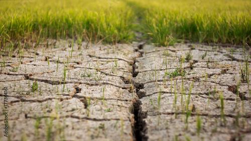 Zdjęcie XXL Sucha pęknięcie ziemia przy ryżu polem