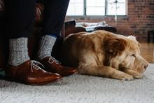 Cute Dog Sleeps At Owners Feet