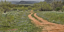 One Lane Dirt Road With Blue F...