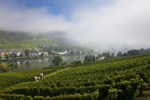 Vineyard & Kaimt Mosel Village...