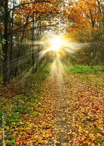 Foto op Canvas Weg in bos Falling leaves in autumn forest. Beautiful landscape.