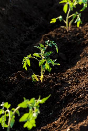 Fotografie, Obraz  Terreno coltivato