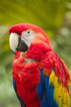 Brightly Colored Macaw Parrot