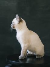 White Kitten In Front Of Black...