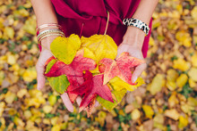 A Woman Holding A Handful Of Colorful Autumn Leaves