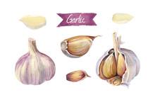Garlic Bulbs And Cloves Isolat...