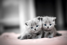 Two Cute Kittens Cuddle Each O...