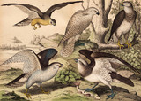 Różne gatunki ptaków na wolności. - 177447197
