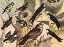 Different Species Of Birds In ...