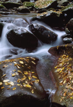 Little Pigeon River Tennessee In Autumn