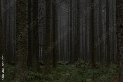 Papiers peints Forets Bellever coniferous plantation, Dartmoor