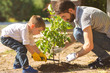 Leinwandbild Motiv The father and a son plant a little tree
