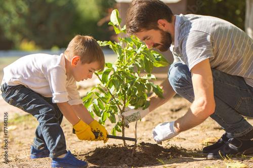 Obraz na płótnie The father and a son plant a little tree