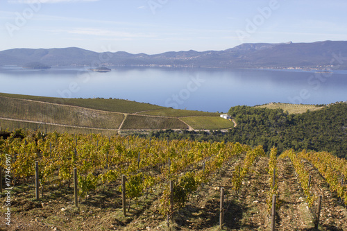 Papiers peints Vignoble Croatian Vineyard
