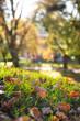 Bunte Blätter am Boden, Park und Bäume im Hintergrund, Herbst