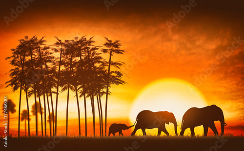 Staande foto Afrika family of elephants