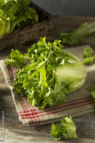 Raw Green Organic Escarole Lettuce