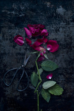 Rose Cut Into Pieces
