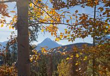 Edith Cavell Mountain
