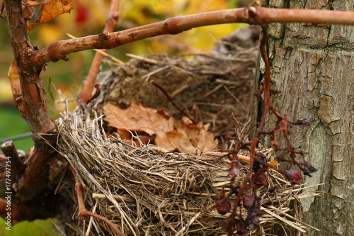 Cinder nest in the screws Canvas Print