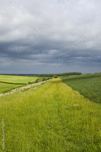 Foto op Canvas Pistache stormy skies and wheat