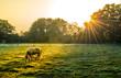 Ein Pferd wird von den Sonnenstrahlen an einem herbstlichen Morgen angeschienen