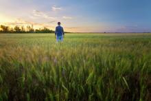 People Wheat Field Sunset / La...