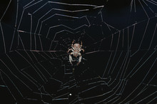 Spider In The Middle Of Dark W...