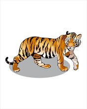 Luxurious Tiger-vector Drawing