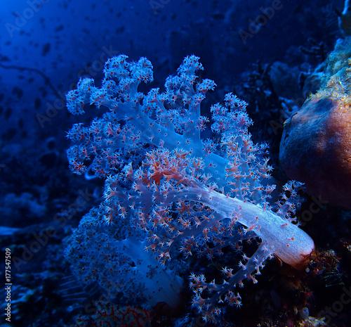 Obraz na dibondzie (fotoboard) Niebieski miękki koral