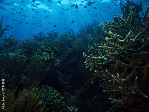 Obraz na dibondzie (fotoboard) Promienie słońca i korale