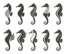 Collection Of Seahorse On Isol...