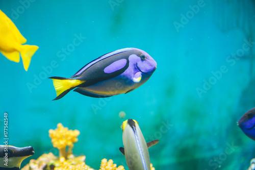 Plakat ryby w akwarium