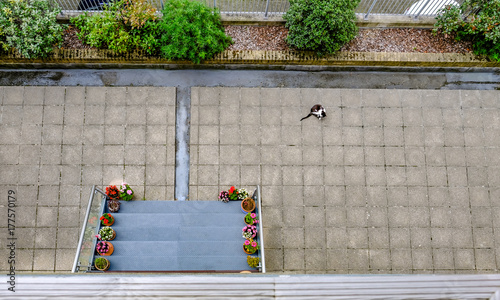 Photo Ariel view of an empty patio area with a black and white cat.