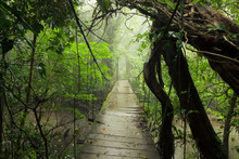 Old Suspension Bridge In Rainf...