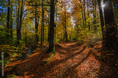 Foto op Canvas Herfst Golden shine autumn panorama scene in the forest, the morning sun shining through the trees, blue sky in background. Beskidy Mountains, Poland.
