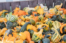 Variety Of Gourds For Sale At Market
