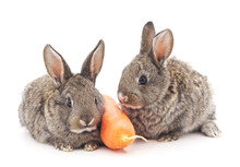 Young Rabbits That Eat Carrots.