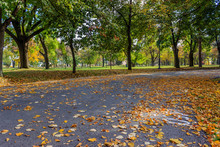 Walkway In The Park Covered Wi...